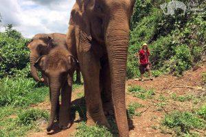 Walking with elephants on ethical elephant tour