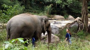 Obersrving Thai elephants on vacation in Thailand