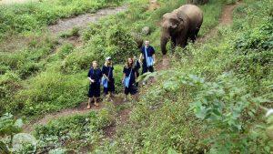 Walking with Thai elephants on ecotourism elephant tour