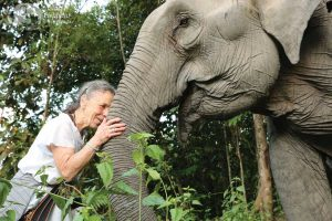 Intimate experience with an elephant at Elephant Sanctuary Cambodia