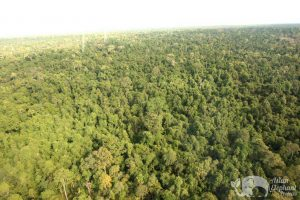 Photo of Cambodia nature reserve taken by drone