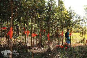Volunteers at elephant sanctuary in Cambodia protect the forest reserve with blessed sashes