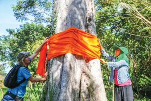 Volunteers tie a Buddhist sash around an old tree to protect it at Elephant Sanctuary Cambodia