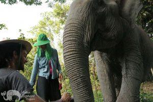 Volunteer at Elephant Sanctuary Cambodia