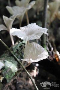 Beautiful wood fungus Cambodia