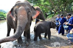 Feeding elephants in Northern Thailand