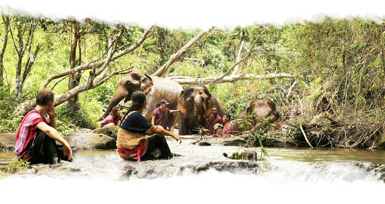 Elephants bathing at waterfall at Karen Elephant Experience Northern Thailand