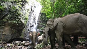 Elephant herd by the waterfall at ethical elephant tour near Chiang Mai in Thailand