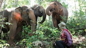 Observing elephants in the jungle on ethical elephant tour
