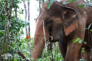 Observing elephants in the jungle