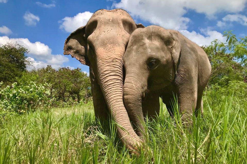 Elephant friends at Samui Elephant Sanctuary