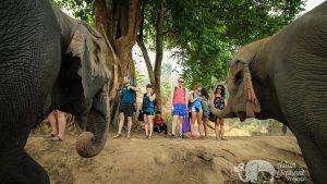 Admiring elephants while on tour at ethical elephant sanctuary