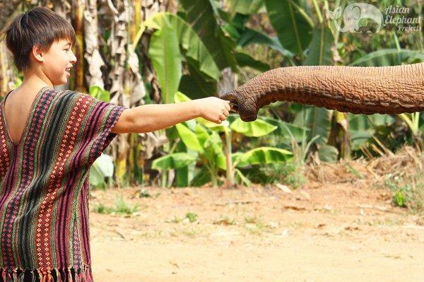 Feeding elephants bananas at ethical elephant tour near Chiang Mai in Thailand