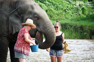 feeding alephants at Ethical elephant sanctuary Thailand