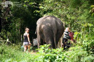 walking with elephants ethical elephant tour