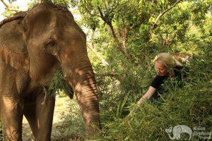 Feeding elephants at Ethical elephant sanctuary Thailand