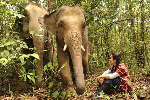 Observing elephants in the jungle at ethical elephant tour