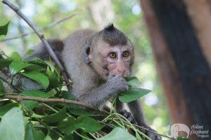 monkey at Elephant Sancuary Cambodia volunteer program