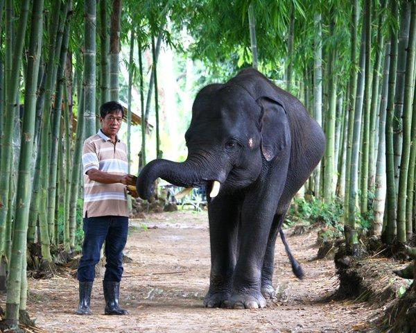 Owner Elephant Heaven ethical elephant tour Chiang Mai Thailand