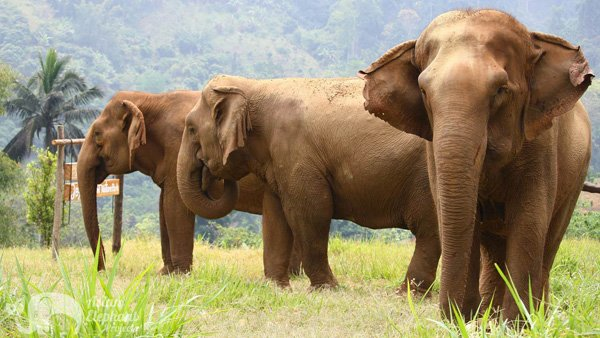 Elephants grazing at Elephant Highlands ethical elephant sanctuary