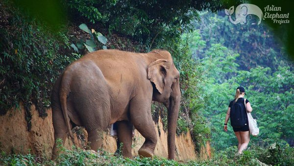 Walking with elephants in the mountains
