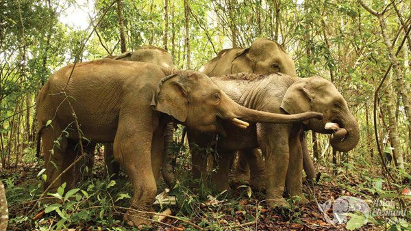 Elephant foraging as a herd at Journey to Freedom ethical elephant sanctuary