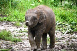 Baby elephant at ethical elephant tour Chiang Mai Thailand