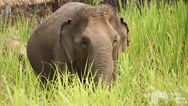 Elephants grazing at Karen Elephant Serenity ethical elephant sanctuary