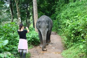 photograghing an elephant at ethical elephant tour while on vacation in Thailand