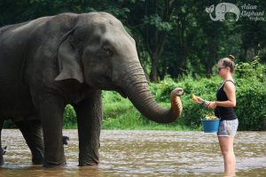 Feeding elephant while on vacation in Thailand