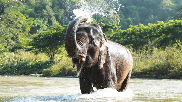 Elephant bathing in the river at Pamper a Pachydrem ethical elephant sanctuary