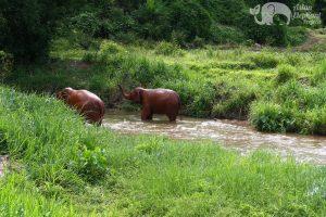 elephants at ethical elephant tour