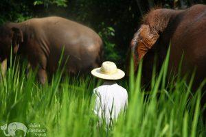 Owner of Elephant Refuge Asian Elephant Projects