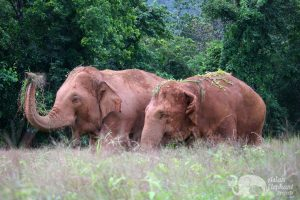 Thai elephants seen on vacation in Thailand