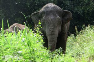elephant relaxing at saddle off project