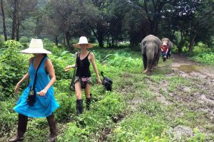 walking with elephants at ethical elephant tour Chiang Mai Thailand