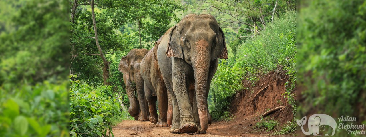 Asian_Elephant_Projects_Contact