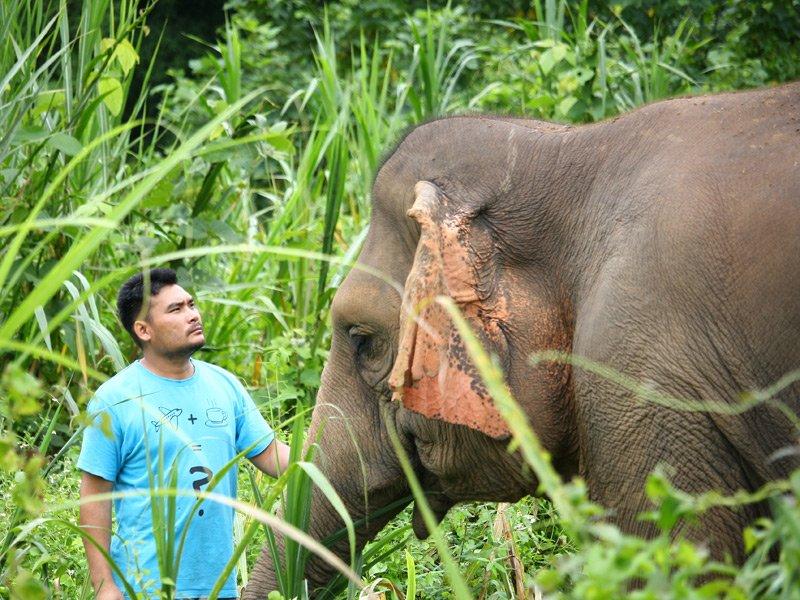 Elephant_Wellness_Project