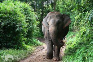 elephants walking in the jungle