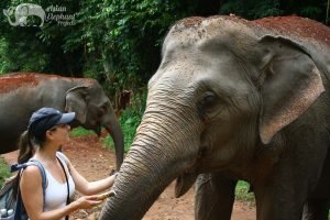 friendly elephants in Thailand