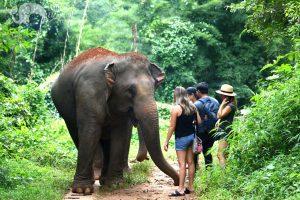 ethical elephant tour