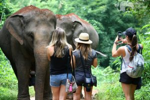 walking with elephants on Thailand vacation