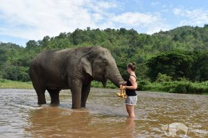 Feeding elephants in the river