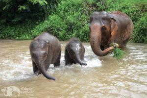 elephant family at elpehant tour ching mai