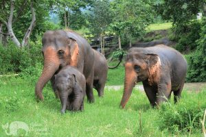 mother and baby elephant at ethical elephant tour