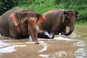 elephant family at elephant tour