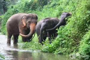 Elephant friends Asian Elephant Projects