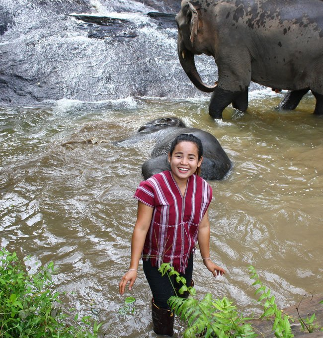 owner at karen elephant retirement chiang mai
