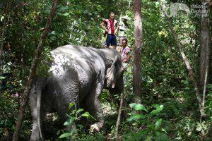 ethical elephant sanctuary