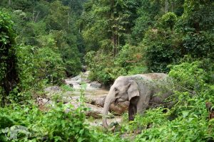 elephant in the jungle thailand